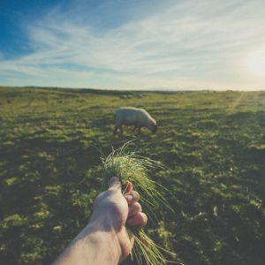 我们的牧羊人耶稣